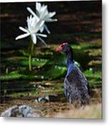 Purple Swamphen Admiring The Water Lilies Metal Print