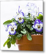 Purple Swirl Violas Metal Print