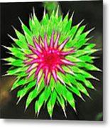 Purple Thistle Flower Metal Print