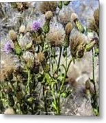 Purple Thistle Metal Print by Gerald Murray Photography