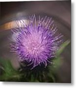 Purple Thistle Metal Print