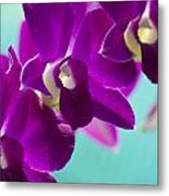 Purple Trio - Orchids Metal Print