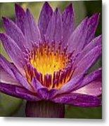 Purple Tropical Water Lily Metal Print