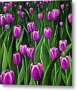 Purple Tulip Field Metal Print