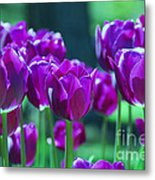 Purple Tulips Metal Print