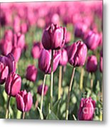 Purple Tulip Standouts Metal Print