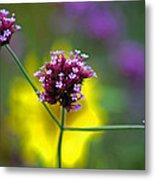 Purple Verbena Flowers Metal Print