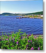 Purple Vetch Overlooking Rocky Harbour-nl Metal Print