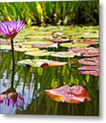 Purple Water Lily Flower In Lily Pond Metal Print
