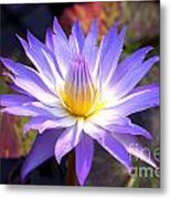 Purple Waterlily With Fall Lilypads Metal Print