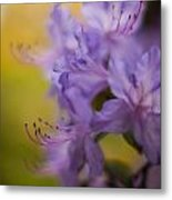 Purple Whispers Metal Print by Mike Reid