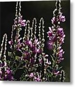 Purple Wild Flowers - 2 Metal Print
