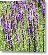 Purple Wild Flowers3 Metal Print