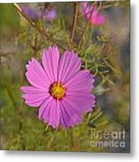 Purple Wildflower Metal Print