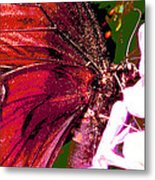 Purple Wings Two Metal Print by Walter Klockers