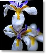 Purple Yellow And White Metal Print by Bobby Mandal