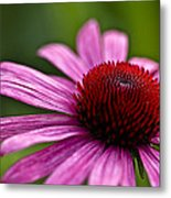Purples And Reds Metal Print