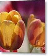 Purpleyellowtulips7016 Metal Print