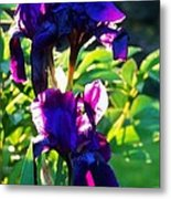 Purplr Iris Shines Metal Print