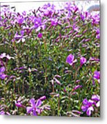 Puryple Metal Print