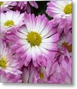 Pushing Up Daisies Metal Print