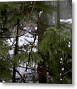 Pussy Willow In The Pines Metal Print