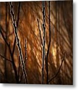 Pussy Willows In The Warm Sunlight Metal Print