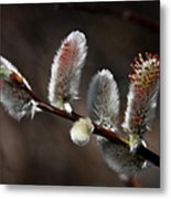 Pussy Willows Metal Print