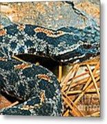 Pygmy Rattlesnake Metal Print