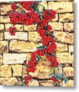 Pyracantha Berries On Stone Wall Metal Print