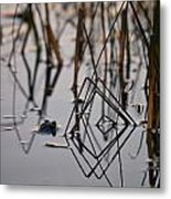 Pythagoras The Frog Metal Print