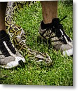 Python Snake In The Grass And Running Shoes Metal Print