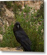 Qouth The Raven Nevermore Metal Print