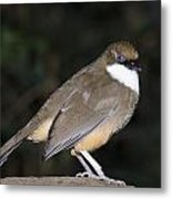 Quailfinch Metal Print by Gerald Murray Photography