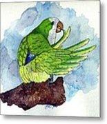 Quaker Parakeet Bird Portrait   Metal Print