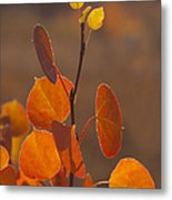 Quaking Aspen In Color   #3749 Metal Print