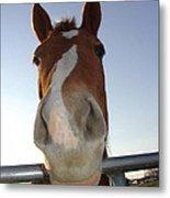 Quarter Horse Portrait Nosing Around Metal Print