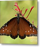 Queen Butterfly Metal Print