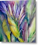 Queen Emma's Lily Blossom Metal Print
