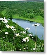 White Daisies At Queen's View 2 Metal Print