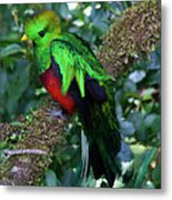 Quetzal Metal Print