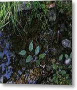 Quiet Brook In The Mountains Metal Print