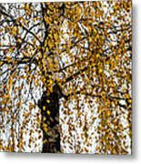 Quiet Charm Of Autumn Metal Print
