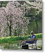 Quiet Time Among The Cherry Blossoms Metal Print