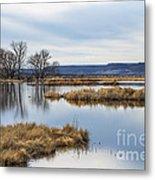 Quiet Wetlands Metal Print