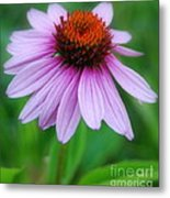Quietly Sitting All Alone Metal Print