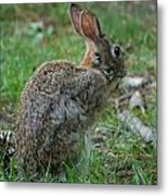 Rabbit 287 Metal Print