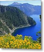 D2m5622-rabbit Brush At Crater Lake Metal Print
