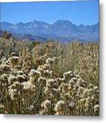 Rabbit Brush Owens Valley Metal Print