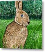 Rabbit In The Grass Metal Print